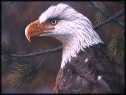 Slide9_eagle