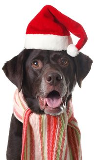 Charleston Ballet Theatre and the Charleston Animal Society team up for Muttcracker performances