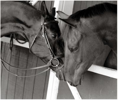 Portrait of Horses, New Milford CT by Susan Lucas Photography, Sherman CT